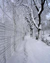 Snow-covered sidewalk with fence on left and trees on right