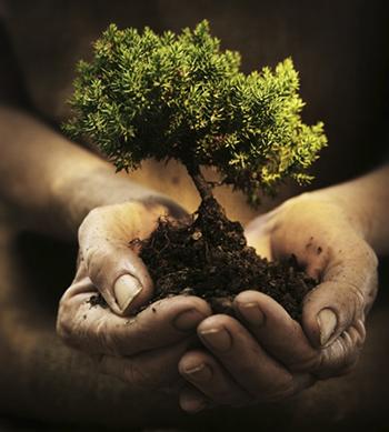 Tending the Garden—NYYM Spiritual Nurture Programs